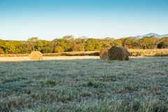 Rolls of haystacks on the field. Warm morning landscape with a rural Royalty Free Stock Photos