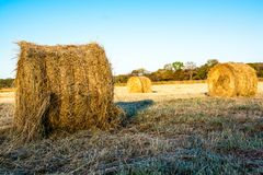 Rolls of haystacks on the field. Warm morning landscape with a rural Stock Images