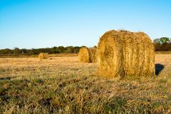 Rolls of haystacks on the field. Warm morning landscape with a rural Stock Photo