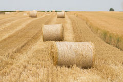 Rolls of haystacks in the fields royalty free stock photography