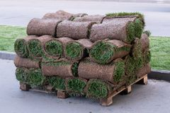 Rolls of natural lawn with the ground stacked on pallets in a stack. royalty free stock images