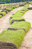 Rolls of new lawn. Rolls of green grass new lawn, laying in progress Stock Images