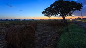 Rolls of paddy straw with golden sunset background at Sungai Besar, Selangor, Malaysia. The paddy straws are made into rolls and recycled for various usage as Royalty Free Stock Photography