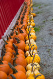 Rolls of Pumpkins Royalty Free Stock Photos