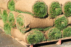 Rolls Of Sod. Close up of the rolls of sod Royalty Free Stock Photos