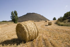 Rolls of straw Royalty Free Stock Photos