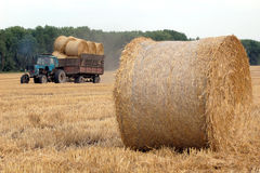 Rolls of straw Stock Image