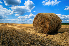 Rolls of straw on the field Stock Photo