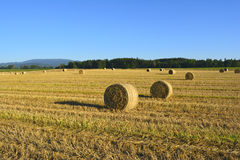 Rolls of straw Stock Images