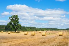 Rolls of straw in the field Stock Photo