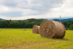 Rolls of straw in the field on a sunny day. Stock Image