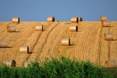 Rolls of straw on the field Stock Photos