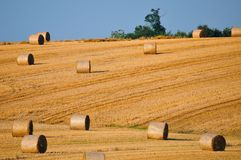 Rolls of straw on the field Stock Images