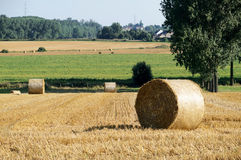 Rolls of straw in the fields Royalty Free Stock Photography