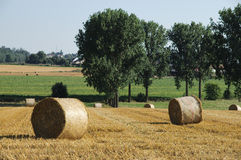 Rolls of straw in the fields. Rolls of straw in the sunny belgian fields Royalty Free Stock Image