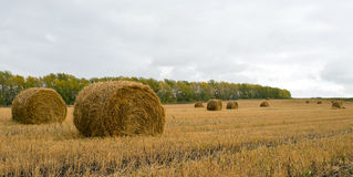 Rolls of Straw. Haystacks on the field. Summer, rural landscape Royalty Free Stock Photography