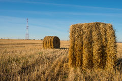 Rolls of Straw. Haystacks on the field. Summer, rural landscape Royalty Free Stock Images