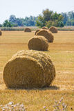 The rolls of straw in the summer Royalty Free Stock Photo