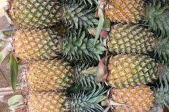 Rolls von den Ananas, die ein schönes Muster mit grüner und gelber Farbe schaffen Lizenzfreies Stockbild