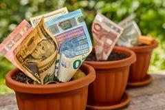 Rolls von den Geldbanknoten, die in den Blumentöpfen wachsen Stockbild