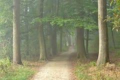 Rollstuhlstraße in einem nebelhaften Wald Stockfotografie