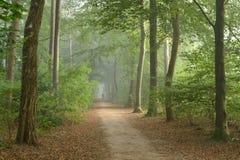 Rollstuhlstraße in einem nebelhaften Wald Stockbilder