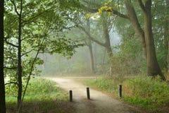 Rollstuhlstraße in einem nebelhaften Wald Lizenzfreie Stockbilder