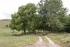 Rolna brama i drzewa Obraz Royalty Free