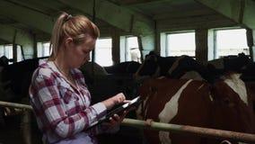 Rolna dziewczyna sprawdza krowy i stawiającą informację w pastylce zbiory wideo