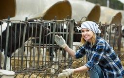 Rolna dziewczyna z łydkami w cowhouse Zdjęcie Royalty Free