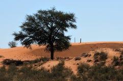 Rolna Kalahari scena, Południowa Afryka Zdjęcie Stock