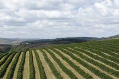 Rolna kawowa plantacja w Brazylia zdjęcie royalty free