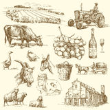 Rolna kolekcja Fotografia Stock