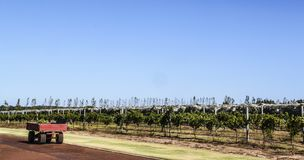 Rolna przyczepa obok plantacji obraz royalty free