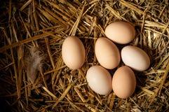 Rolna scena, grupowi jajka na słomie, piórka, jajka wysocy - proteina, zdrowy jedzenie, dobry styl życia pojęcie Easter szczęśliw obrazy stock