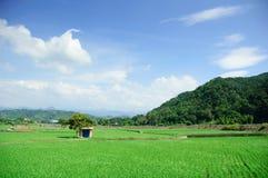 rolna zieleń Zdjęcie Stock