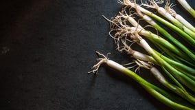 Rolna zielona cebula na czarnym łupku Zdjęcia Stock