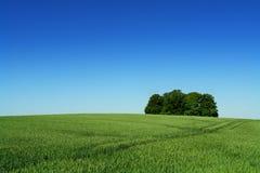 rolna ziemia Zdjęcia Stock