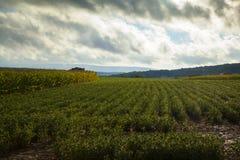 Rolne uprawy zdjęcia stock