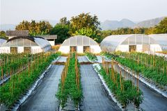 Rolnego pola agronomii tła naturalny las Fotografia Royalty Free