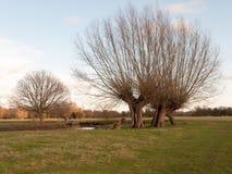 rolnego pola trawy zimy drzew nagi dedham uk Zdjęcie Royalty Free