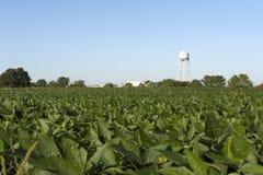 rolnego pola wierza woda Zdjęcie Royalty Free