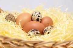 Rolni jajka w słomianym koszu Jajko karmazynka i jajko przepiórka obraz royalty free