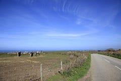 Rolni konie Cornwall Anglia Fotografia Royalty Free