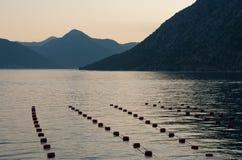 rolni mussels Fotografia Stock
