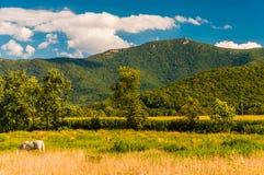 Rolni pola i widok Appalachians w Shenandoah Valle obrazy stock