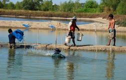 rolni rybi tajlandzcy pracownicy Zdjęcie Royalty Free