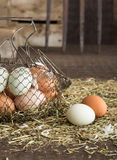 Rolni świezi jajka Obraz Stock
