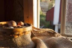 Rolni świezi jajka w koszu w klatce Obrazy Stock