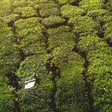 Rolnictwa Agriculturist żniwa uprawy Herbaciany pojęcie Obrazy Royalty Free